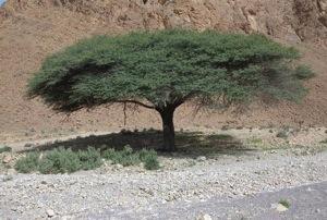 Un arbre en Afrique Michel Vidal, photographe